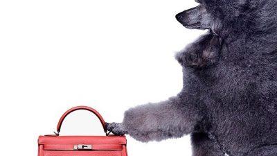 Bags of Luxury – Hermès Re-sellers